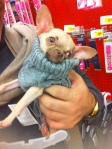 We came to Petco to look for a sweater. Excuxe me does this come in black and a smaller size?